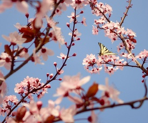 blossom, blue, and butterfly image