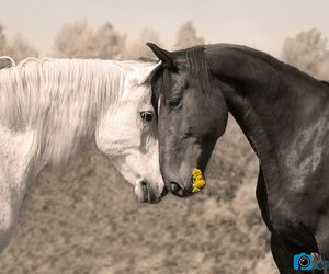baby animals, cute animals, and horses image