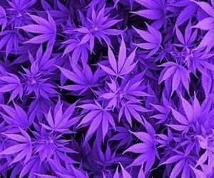 weed, purple, and marijuana image
