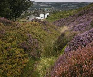 heather, nature, and west yorkshire image