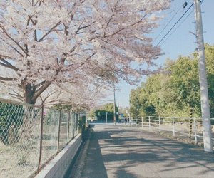 cherryblossom, japan, and pink image