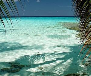 beautiful, palm trees, and sea image