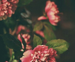 flowers, pink, and whatever image