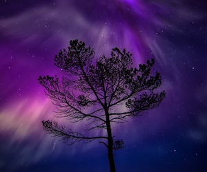 tree, purple, and night image