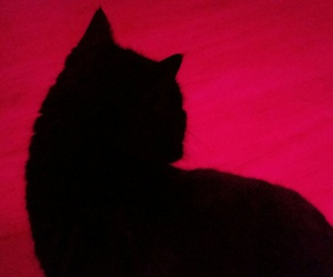 aesthetic, black, and cat image