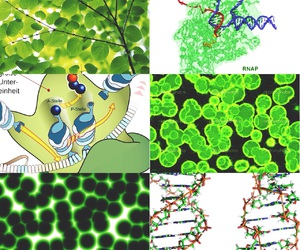 biology, double helix, and nature image