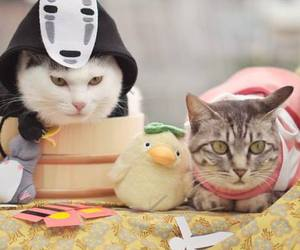 cats, gato, and japan image