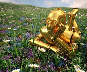star wars, c3po, and flowers image