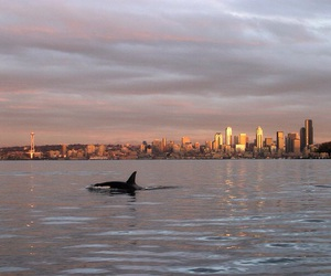 blue, city, and killer whale image