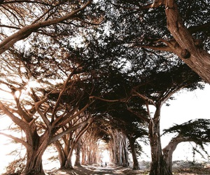 road, trees, and adventure image