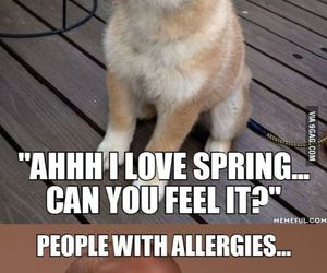 funny, spring, and allergies image