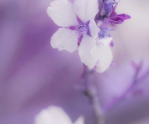 flowers, lavender, and lilac image