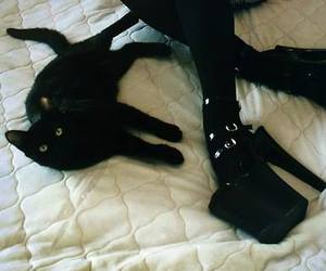 cat, black, and goth image