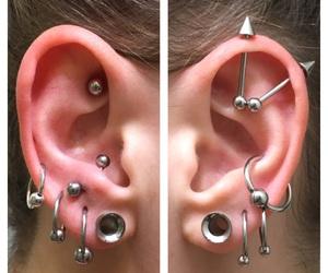 captive, ear, and cartilage image