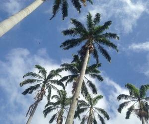 wallpaper and palmeras image