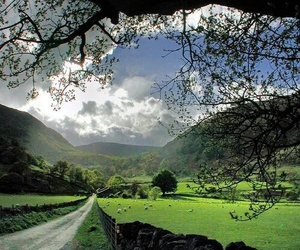 nature, england, and countryside image