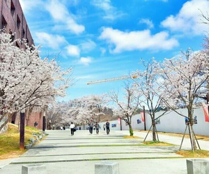 flower, university, and cherry blossoms image