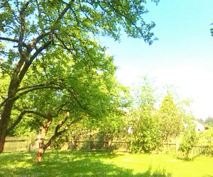 summer, trees, and our cotage image
