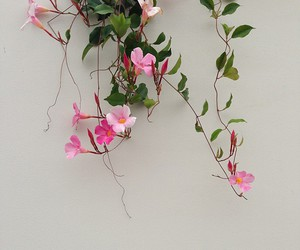 flowers, pink, and plants image