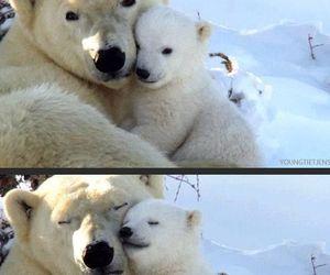 love, Polar Bear, and bear image