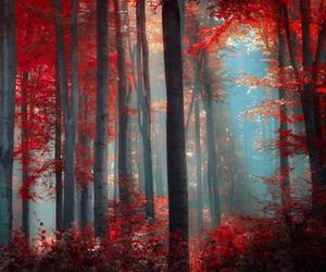 forest, sun, and wild image