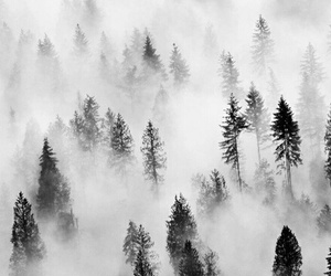 forest, black and white, and nature image