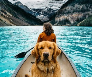 dog, travel, and animal image