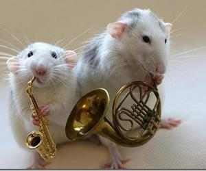 animals, music, and cute image