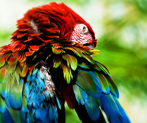 bird, photography, and parrot image