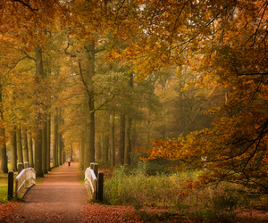autumn, holland, and netherlands image