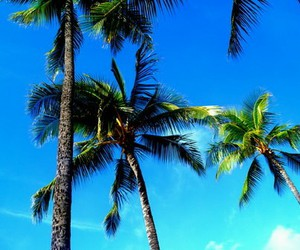 blue sky, summer, and palm image
