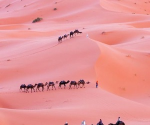 pink, camel, and desert image
