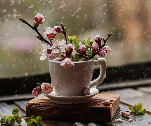 flowers, rain, and spring image