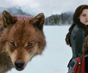 twilight, bella, and wolf image