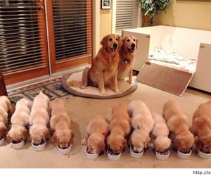 dogs, ًًًًًًًًًًًًً, and 😐 image