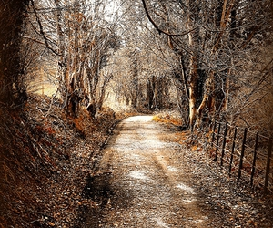 bare, brown, and dirt road image