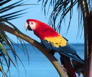 macaw and parrot image