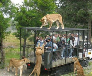 cage, kitties, and 😂 image