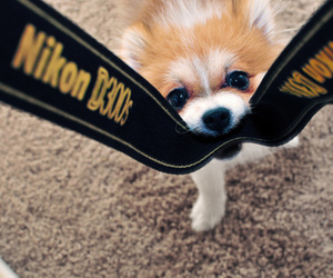 dog, cute, and nikon image