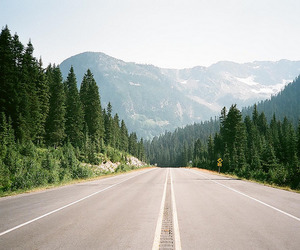 nature, road, and green image