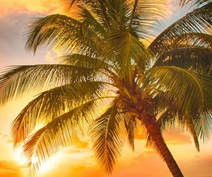 beach, wallpaper, and sunset image