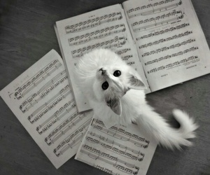 cat music b&w happiness image