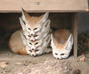 fox, eared, and cute image
