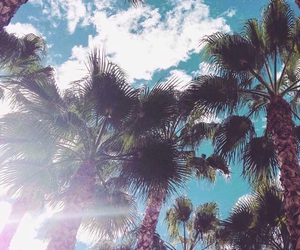summer and palms image