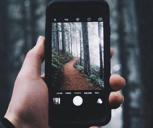 nature, forest, and iphone image