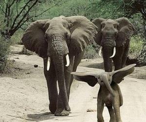 elephant, animal, and dumbo image
