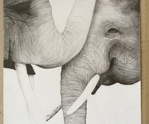 elephants, drawing pencil, and drawing animals image