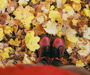 autumn, ocre, and red image