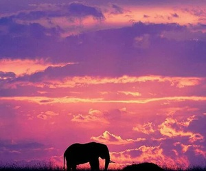 africa, elephant, and nature image