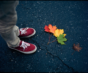 vans, leaves, and photography image